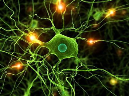 brain_cells.jpg
