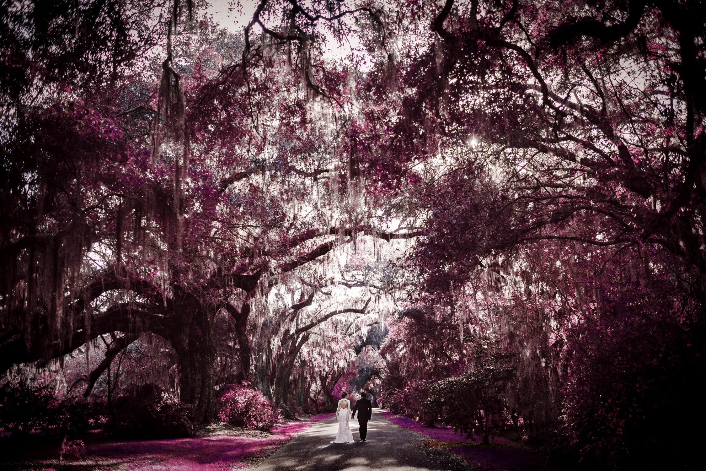 charleston south carolina magnolia plantation wedding portrait-1.jpg