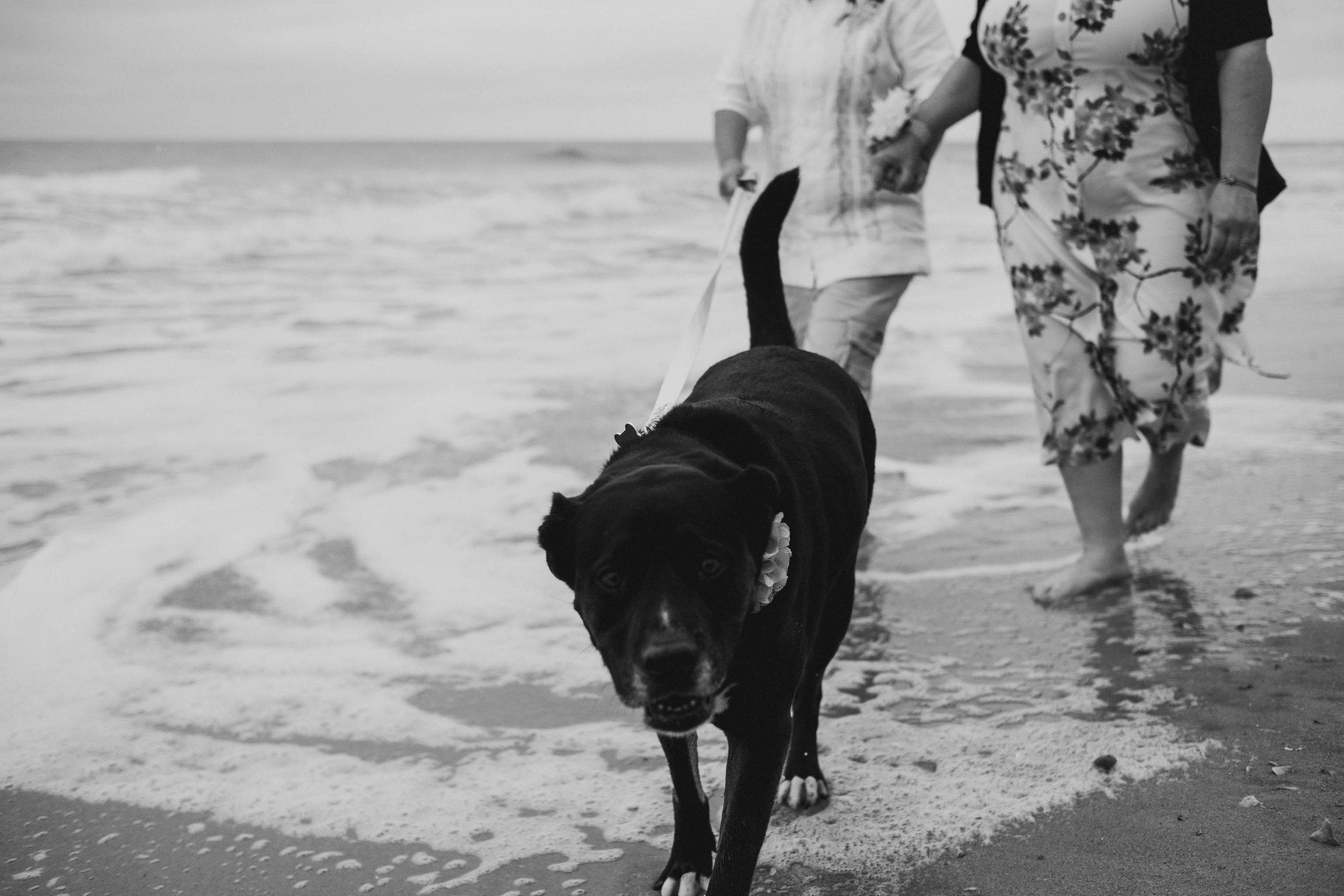 pet-friendly-topsail-island-same-sex-beach-wedding-photo.jpg