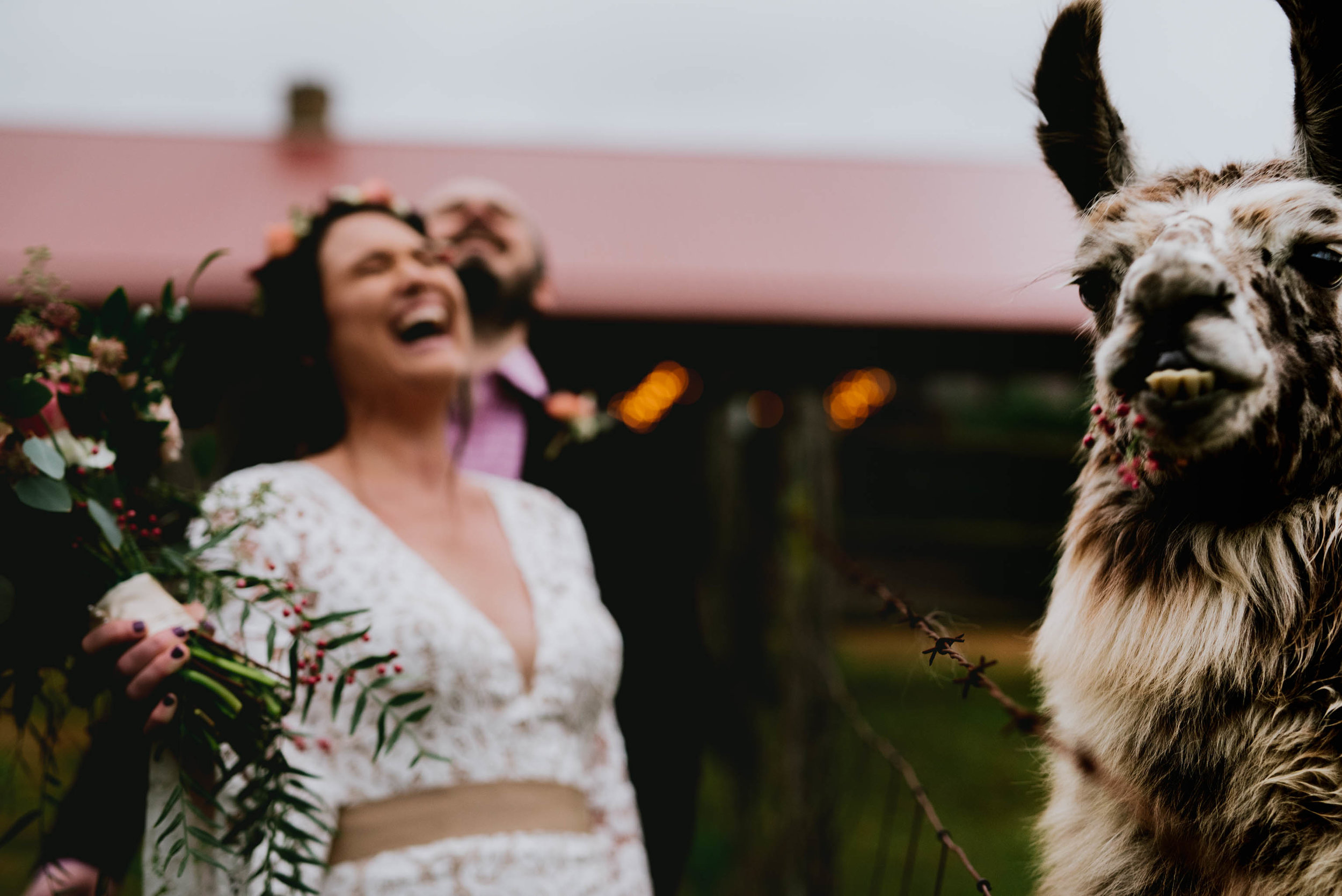 bride and groom laughing with chocochip the llama