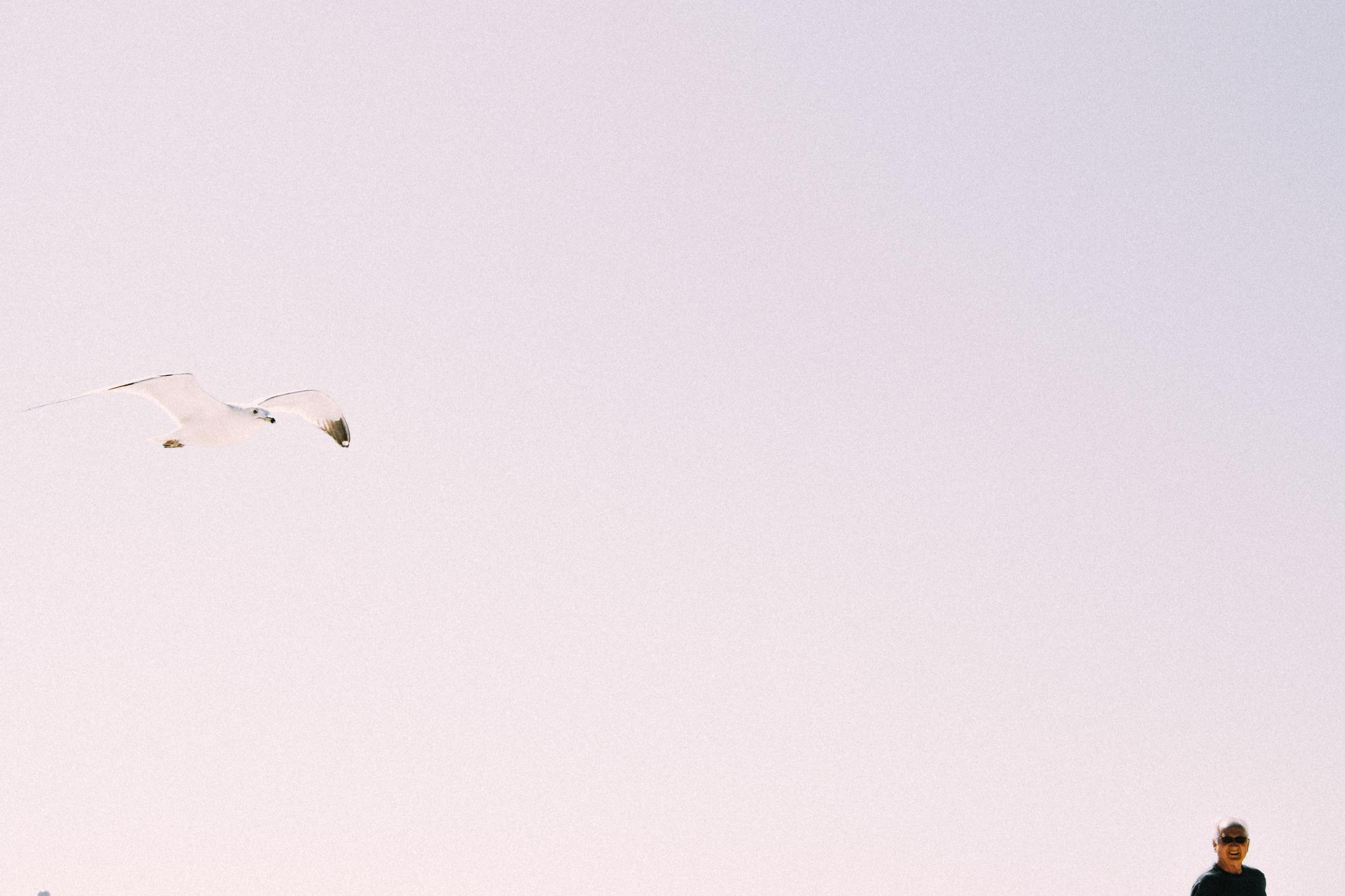 seagull%2Band%2Bman.jpg