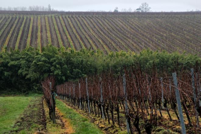 The hills of the Côtes de Castillon