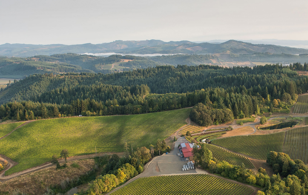 Elk Cove Vineyards in Oregon