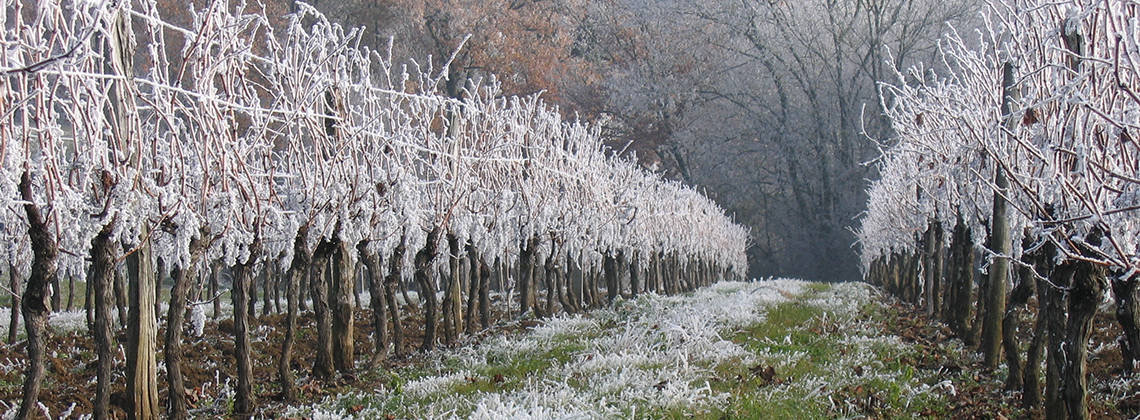 What-happens-to-Bordeaux-s-vineyards-in-winter_i1140.jpg