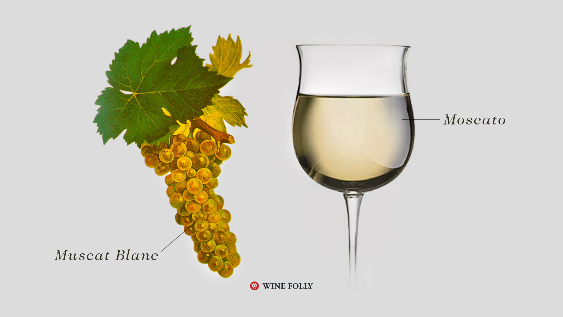 Moscato-Wine-Muscat-Blanc-Grape-WineFolly.jpg