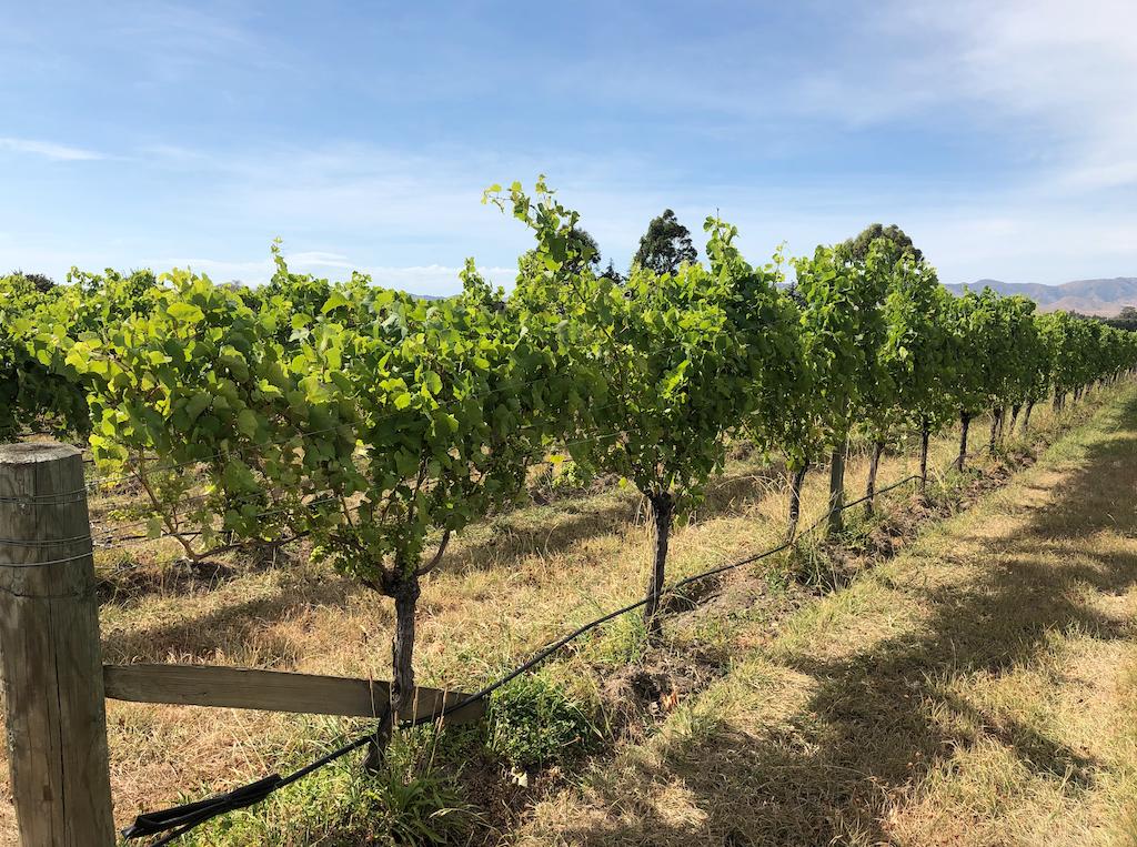 TWR Vineyard