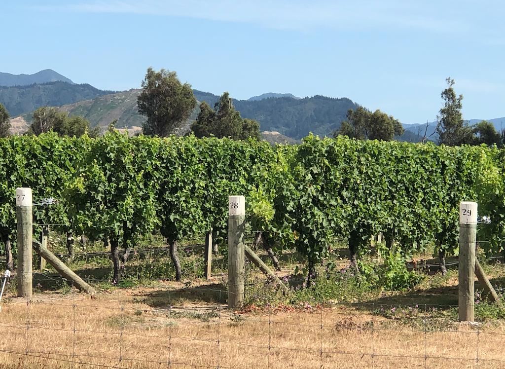 Neighboring Vineyard
