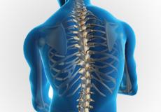 Support your precious lumbar vertebrae
