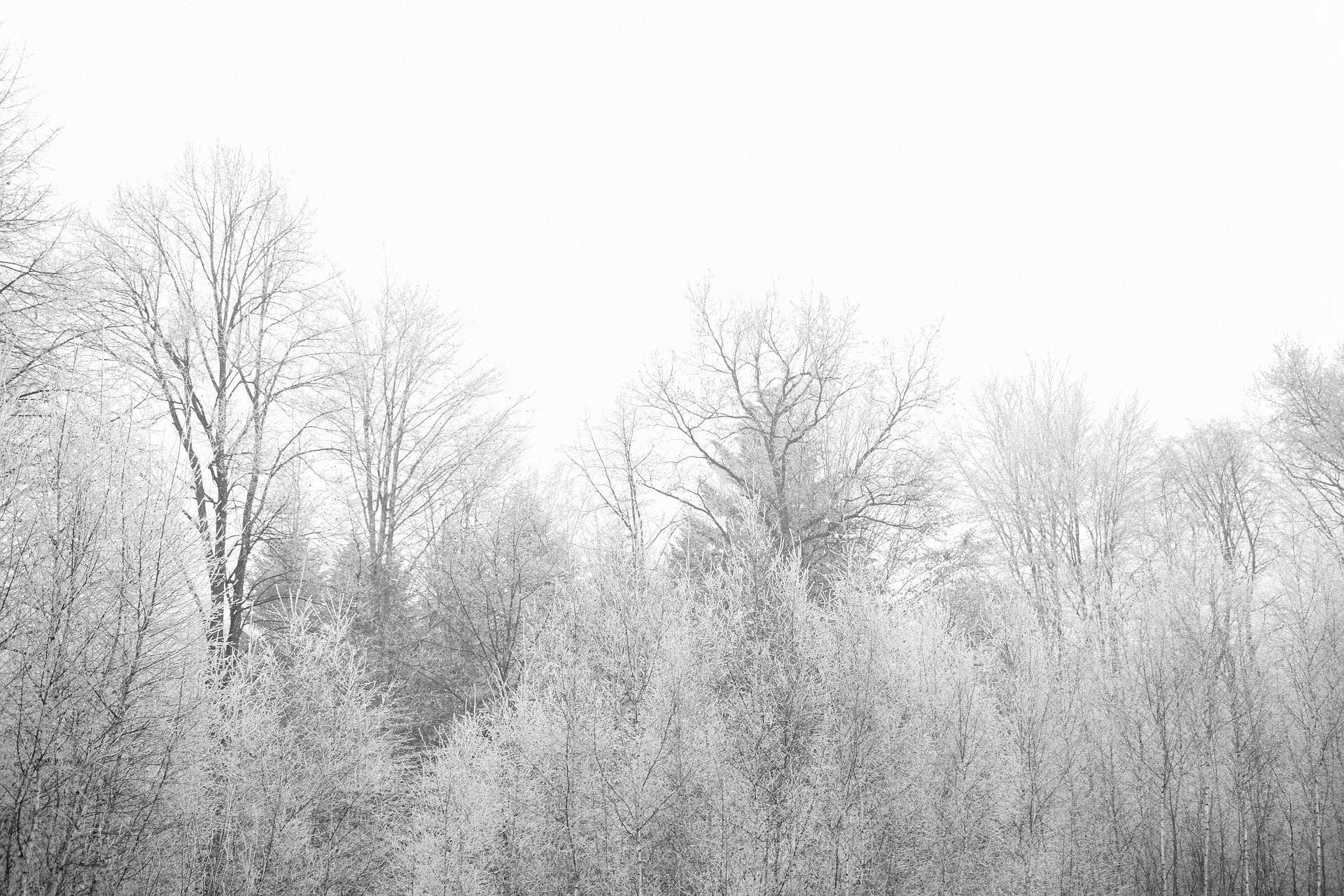 autumn-839563_1920.jpg