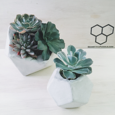 geometricfossils_succulent_watering_geomtric_vase