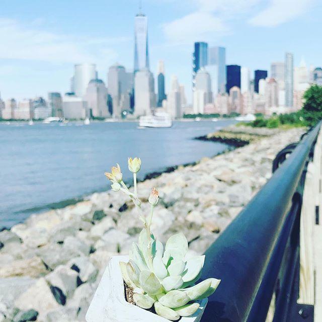 New York City 🌃 do you #applepay  Visit: www.apple.com/apple-pay/nyc/  #madeincalifornia #geometric #succulents #handmade #LAtoNY