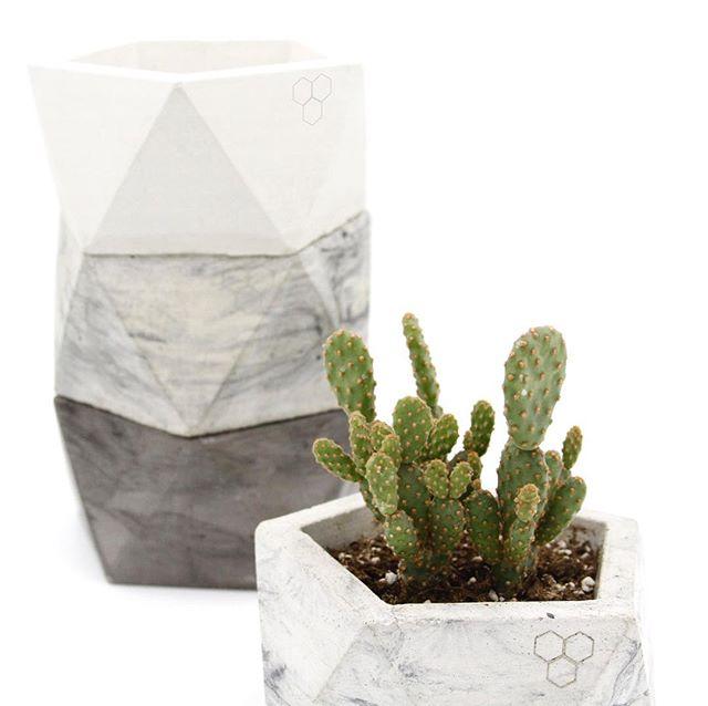 🌵🌵Mini Cinnamon Cactus with our Large Flat Icosahedron- 🌵🌵 . . . . . . . #geometric #geometric_fossils #officeplants #geoplanters #geometry #moderplanters #airplants #plants #concreteplanters #concretevase #geometricdesigns #losangeles #westcoast #geovase  #smooth #cactus #etsy #minimalist #succulents #airplants #cactusmagazine#cacti #sacredgeometry #concrete #haworthia #zebraplant #cacti