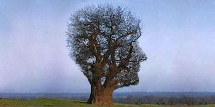 Tree-head-feature-size.jpg