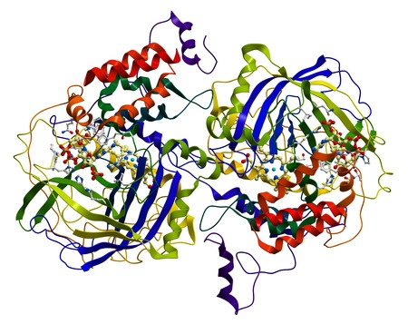 123rf.com (c) Leonid Andronov: Enzyme Catalase, a very important antioxidant in organisms