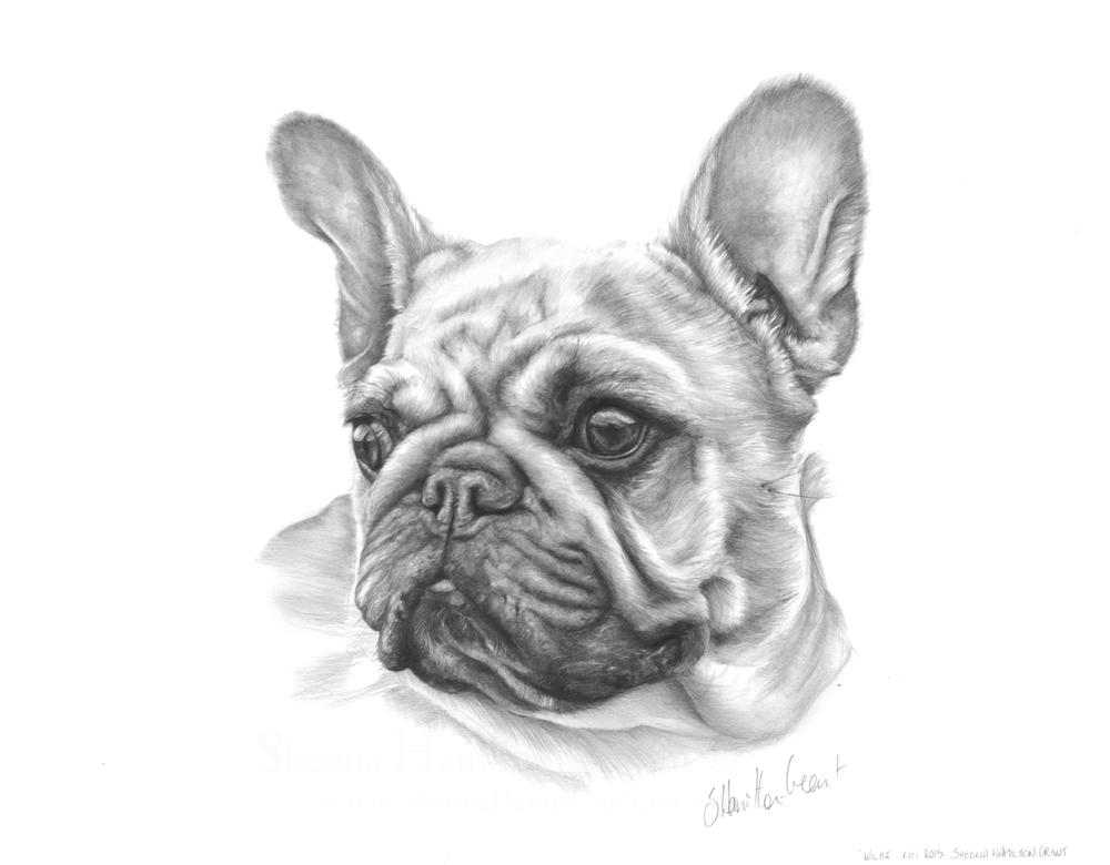 Wilma, pencil on paper, 26x23 cm.