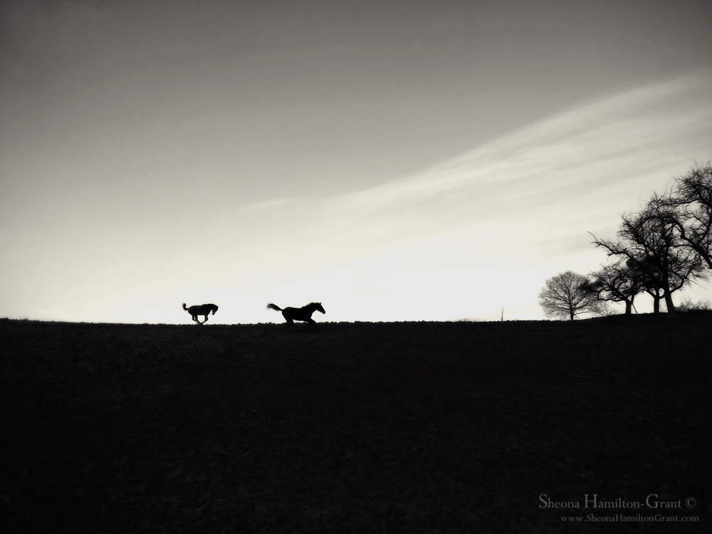 New-Year Gallop, iphone