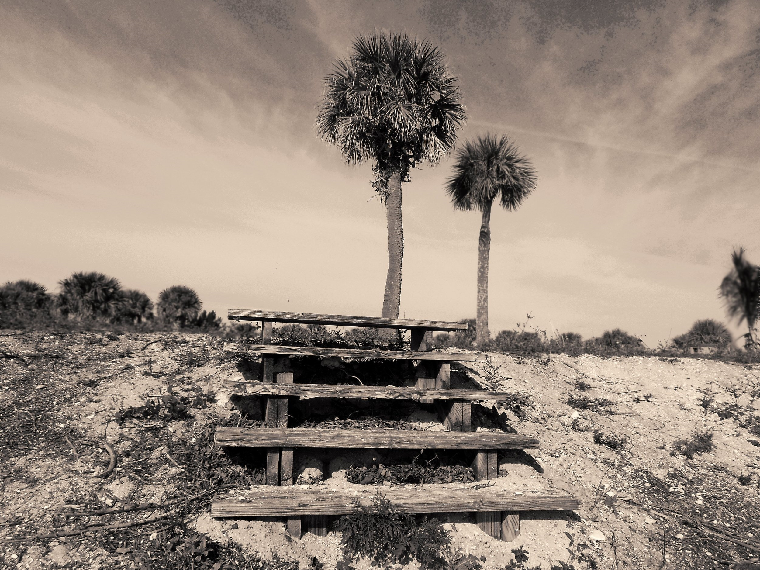 Steps and Palms.jpg
