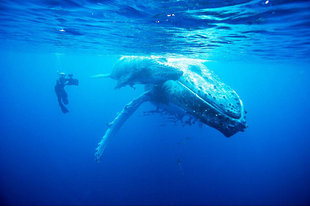 Doug-Allan-films-Humpback-Whale.jpg