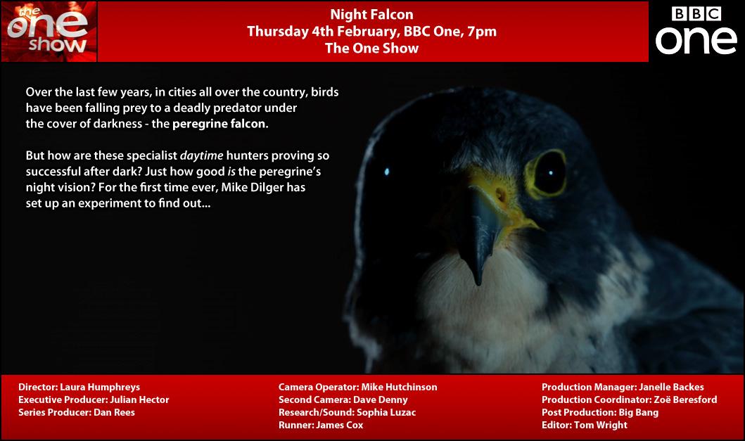 TX Card - Night Falcon.jpg