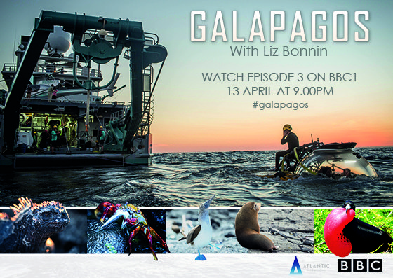 Galapagos With Liz Bonnin   Watch episode 3 BBC1 on 13 April at 9pm     On the final leg of this mission, Liz Bonnin and a team of scientific experts look at what the future holds for the Galapagos and the human impact on these islands. The team scan a spectacular lava cave, track giant tortoises and dive into the deep blue waters to witness the birth of a brand new island. By bringing together the findings of their scientific research they hope to find a way of protecting Galapagos'future.    '...their expedition is another feast for the eyes' Telegraph   'The footage, taken with blue light, of a coral reef off Scalesia is breathtaking, while the sight of giant tortoises lumbering through the vegetation is both charming and magisterial... it's absolutely spectacular' Radio Times   'an embarrassment of riches, both natural and televisual' The Sunday Times   'fascinating' The Sunday Telegraph   'utterly transfixing' The Observer   'glorious... spectacular' Daily Mail   'The filming on this series is simply stunning #Galapagos superbly presented by @lizbonnin' @SimonBeale on Twitter   'Amazing BBC at its best. Just another wonderful show which justifies the license fee' @patsyatticus on Twitter     All three episodes will be available to watch on BBC iPlayer for a limited time  Come face to face with hammerhead sharks in 360 VR on our Facebook page   www.facebook.com/AtlanticProductions     SERIES DIRECTOR: Mike Davis -SERIES PRODUCER: Anthony Geffen  EDITOR: Robbie Pettigrew -SOUND - Freddie Claire  CINEMATOGRAPHY: Robert Hollingworth, Michael Pitts & Julius Brighton  POST PRODUCTION: Picture: Clear Cut /Sound: Halo Post  Galapagos is an Atlantic Productions Film in co-production with Alucia Productions for BBC  www.atlanticproductions.tv