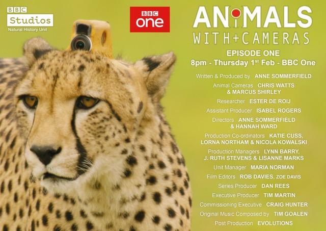 Animals With Cameras Ep1.jpeg