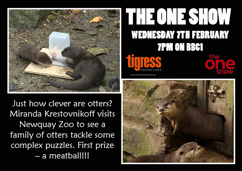 One Show Otterly Clever TX.JPG