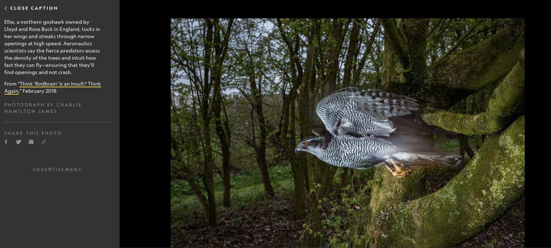 Photography by Charlie Hamilton James