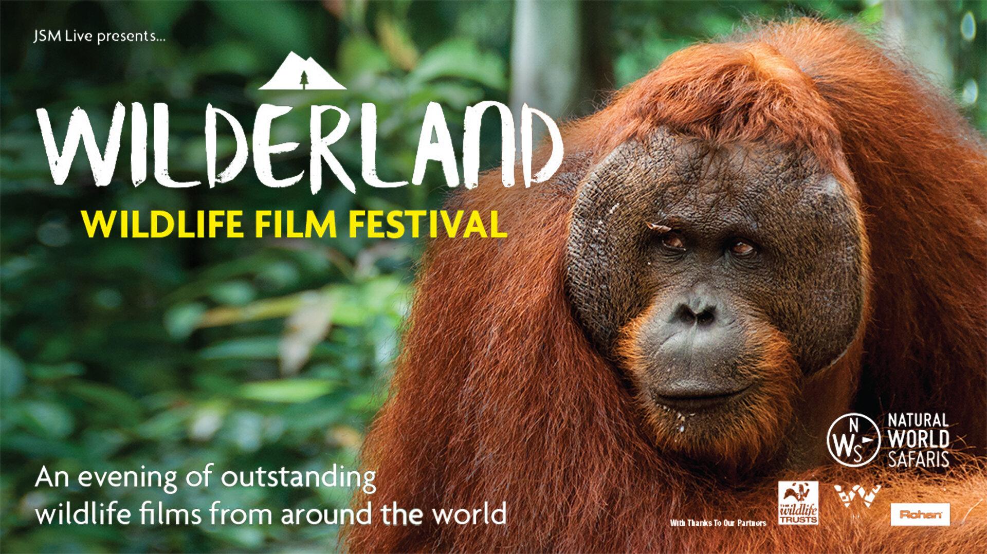 Wilderland-A3-Horz-(Orangutan)-1920x1080.jpg