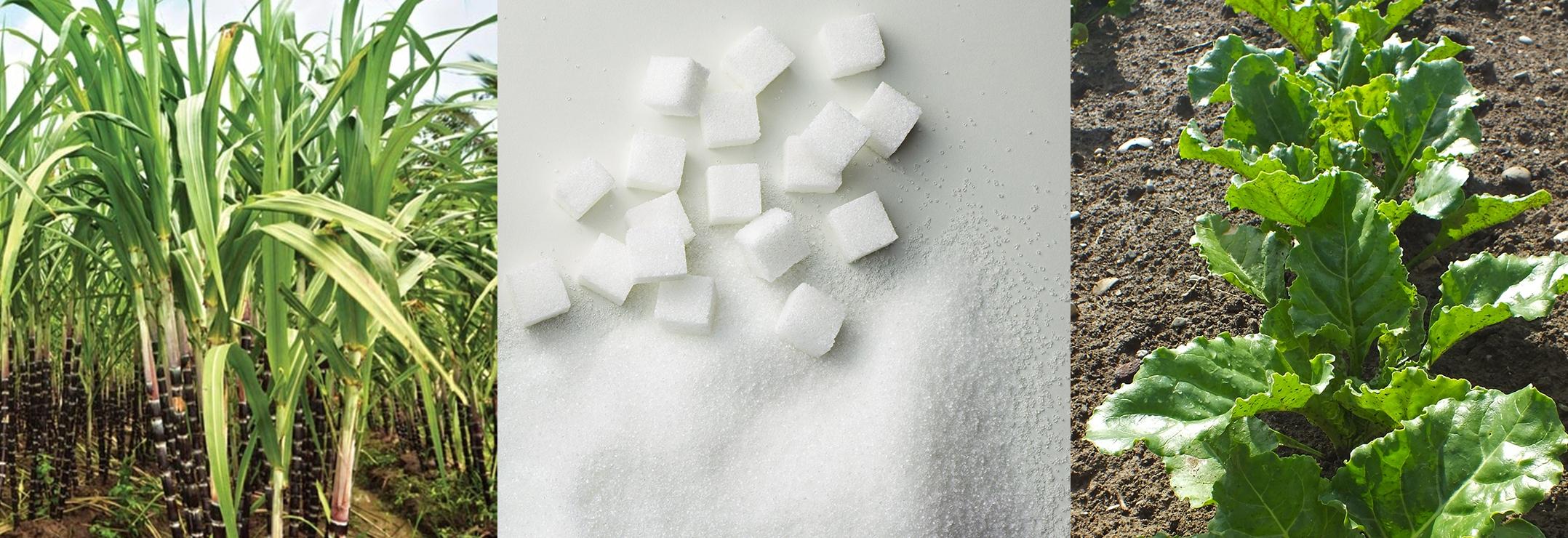 Photshop beet sugar cane sugar sugar - BLUR.jpg