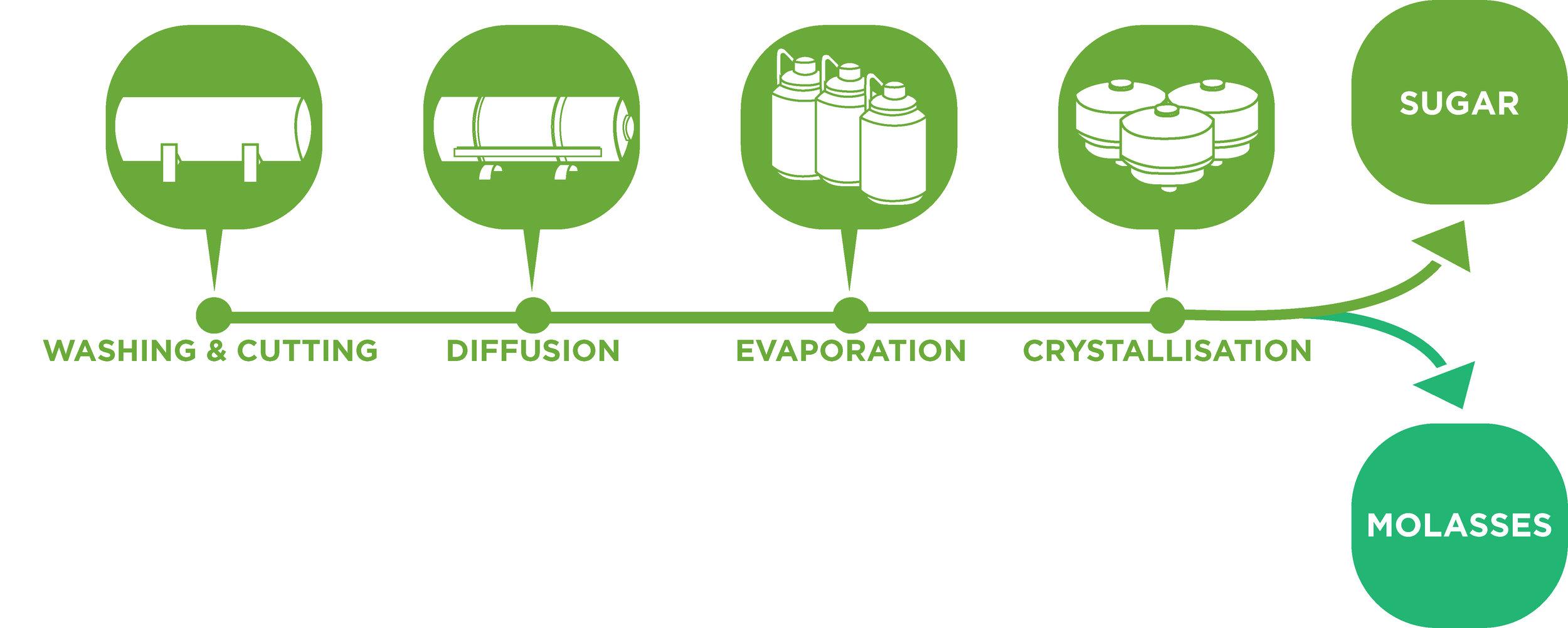 Molasses infography - v2.jpg