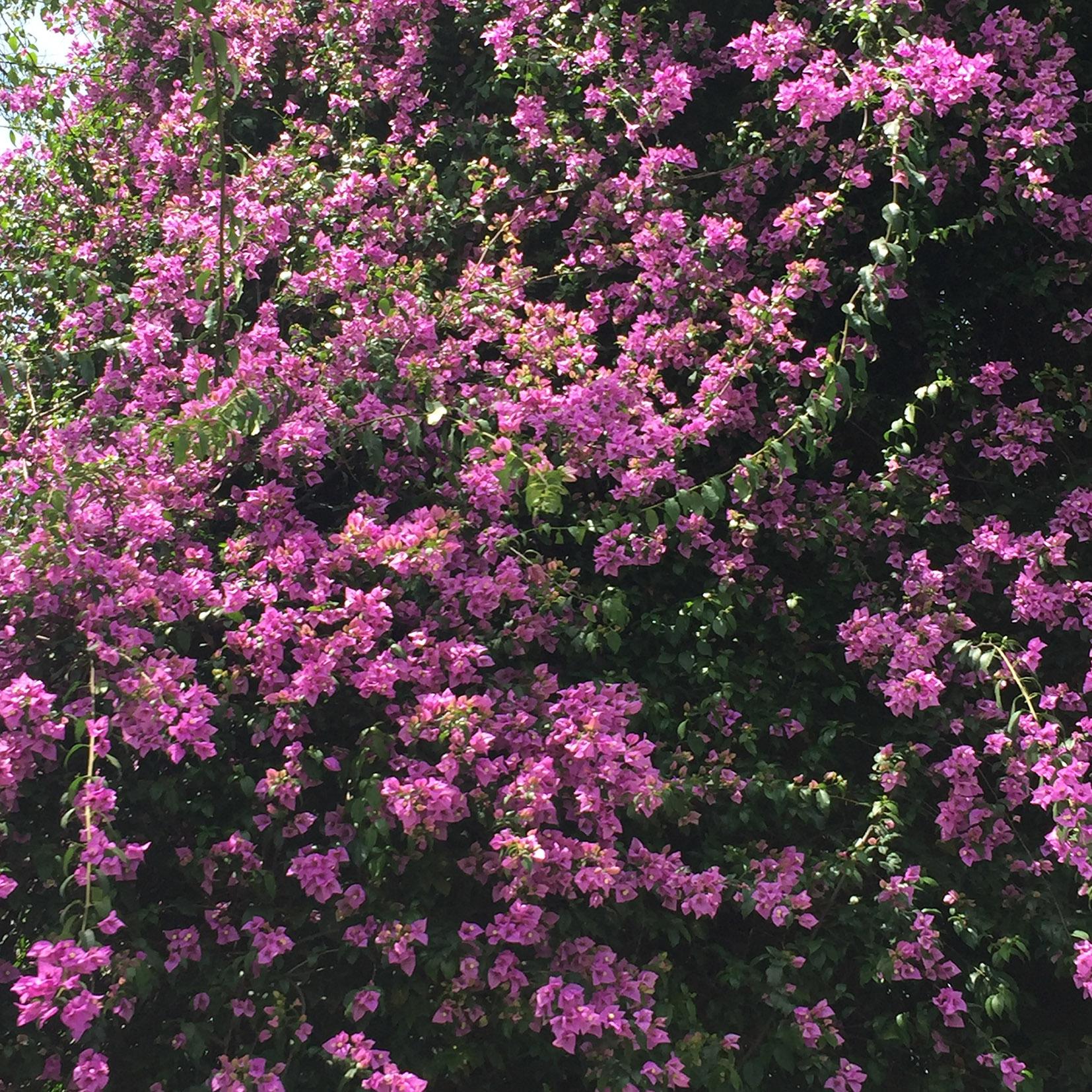 aledelatorre_flower_8.jpg