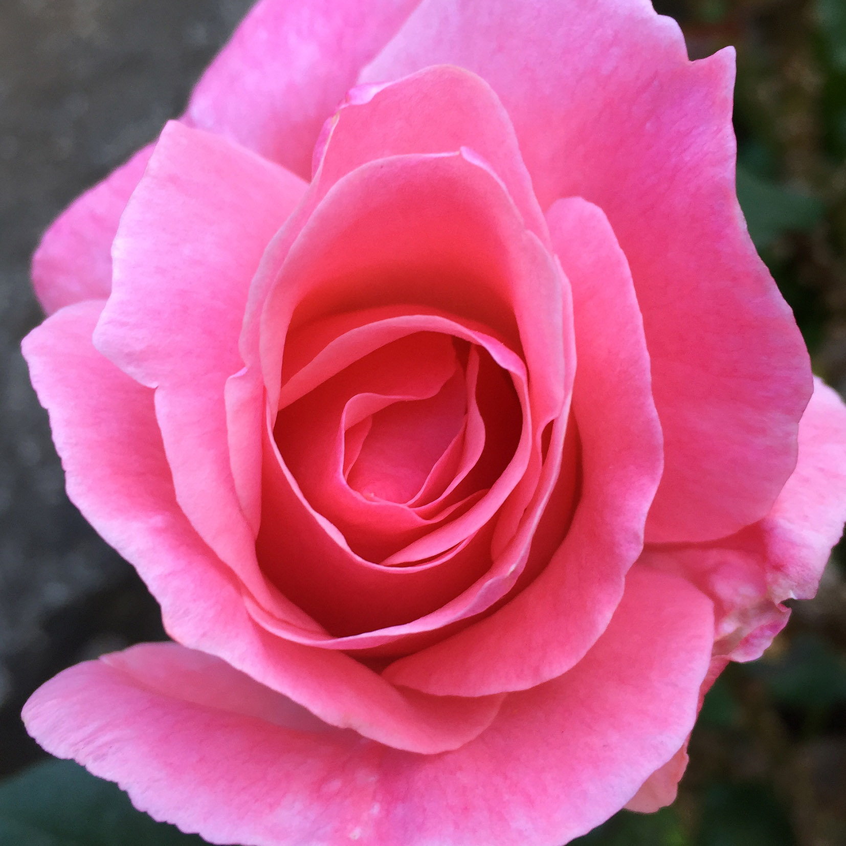 aledelatorre_flower_1.jpg