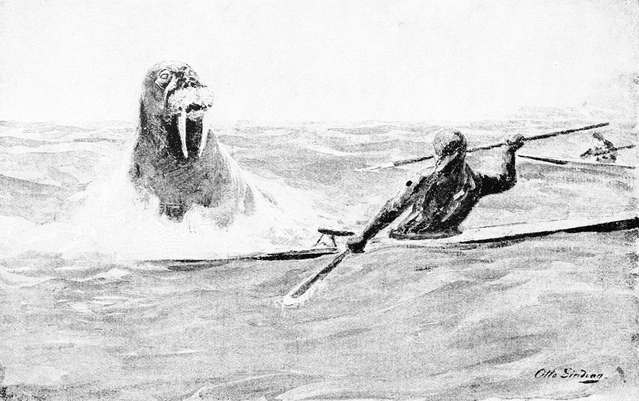 PSM_V46_D468_A_kayak_man_attacked_by_a_walrus.jpeg