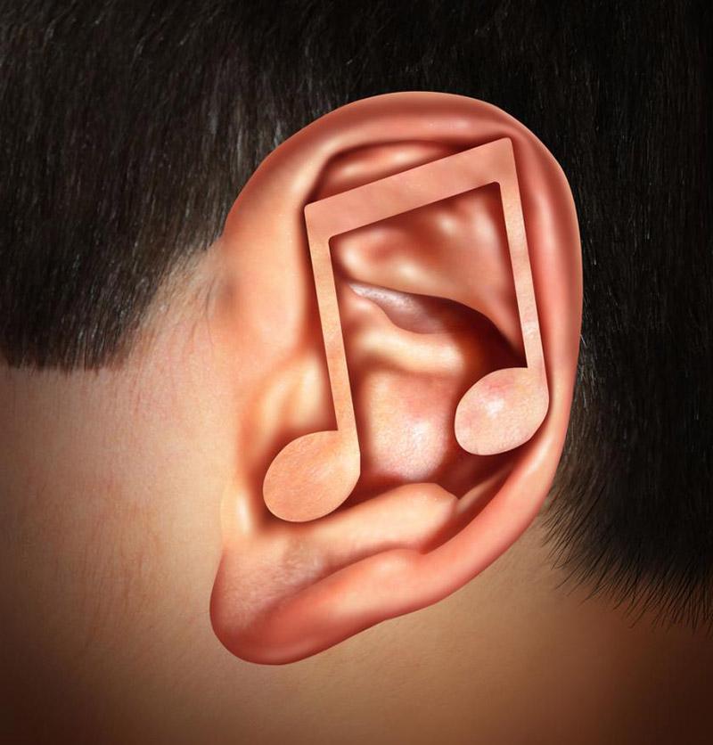 2-earworms-i-tarli-dell-orecchio-udisens-news.jpg