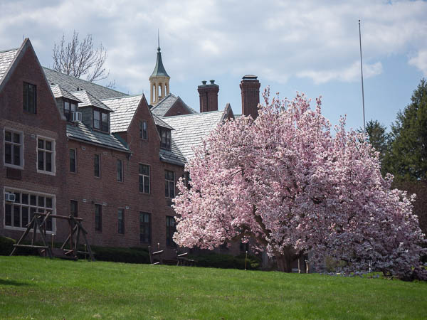 Magnolia-tree-1020945.jpg