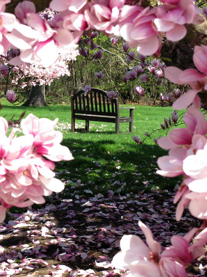 042911 Magnolia And Surroundings Hi 0011.jpeg