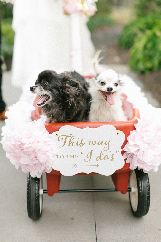 Brianna Wilbur-Zabotinsky-pups.jpg