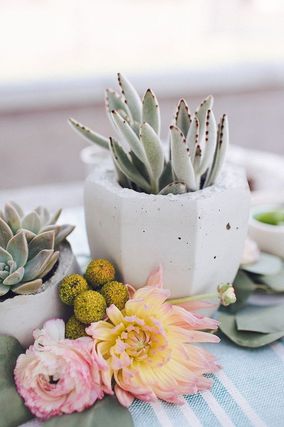 14-faceted-white-concrete-planter-with-a-succulent-can-be-used-for-a-cool-centerpiece.jpg