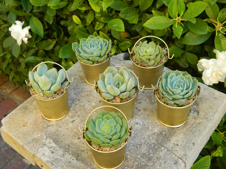succulent-plants-wedding-favor.jpg