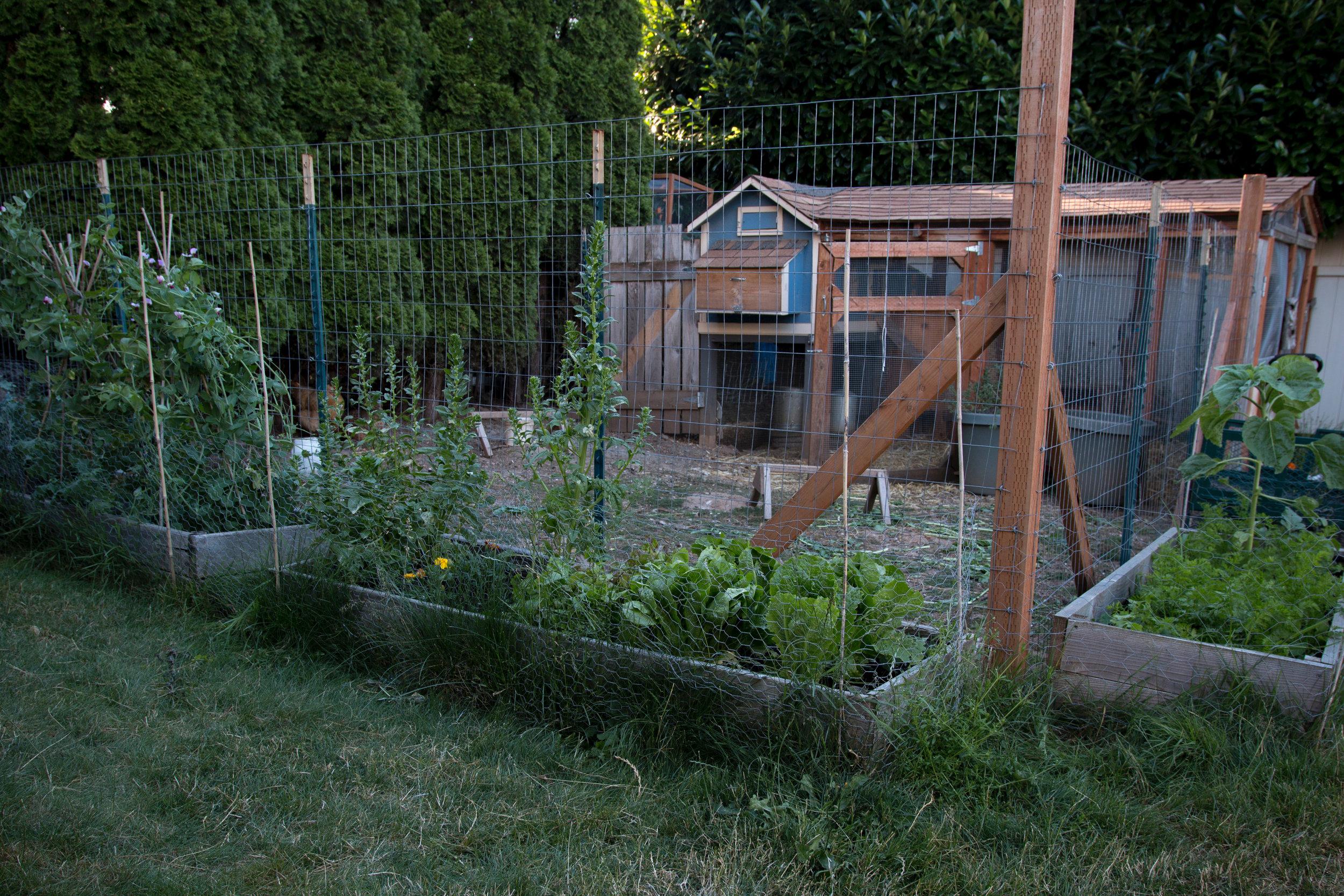 2018 garden