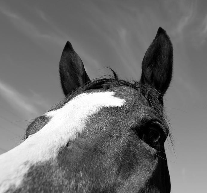 horses04.jpg