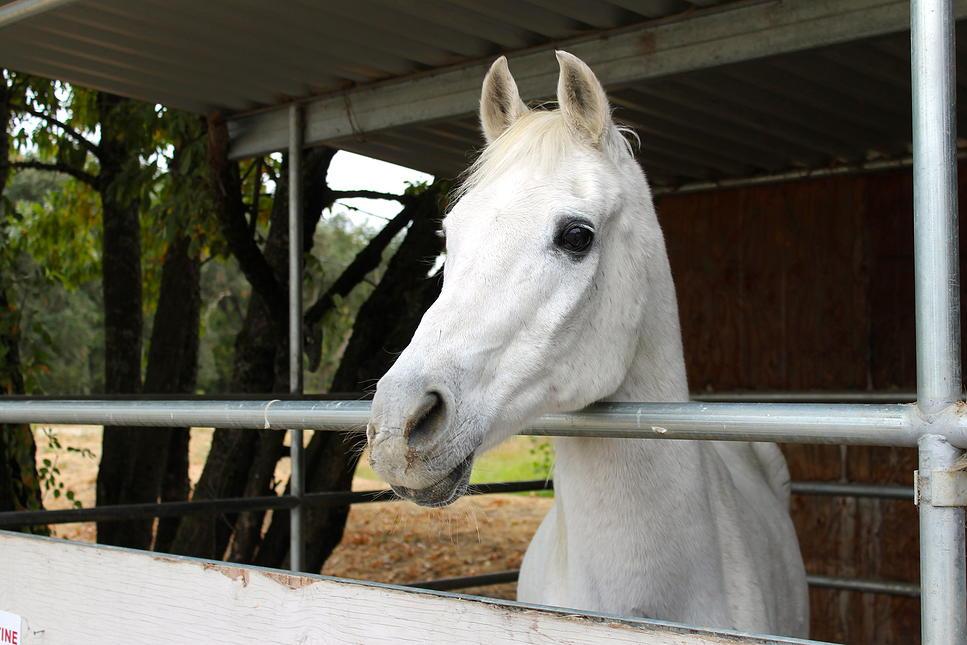 horses05.jpg