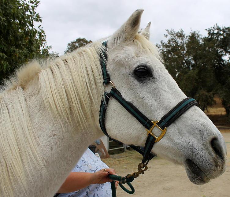 horses06.jpg