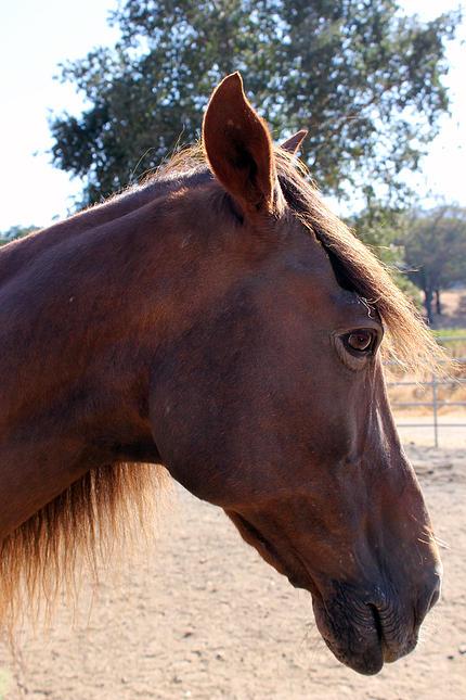 horses21.jpg