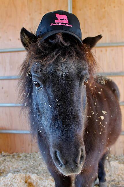 horses25.jpg