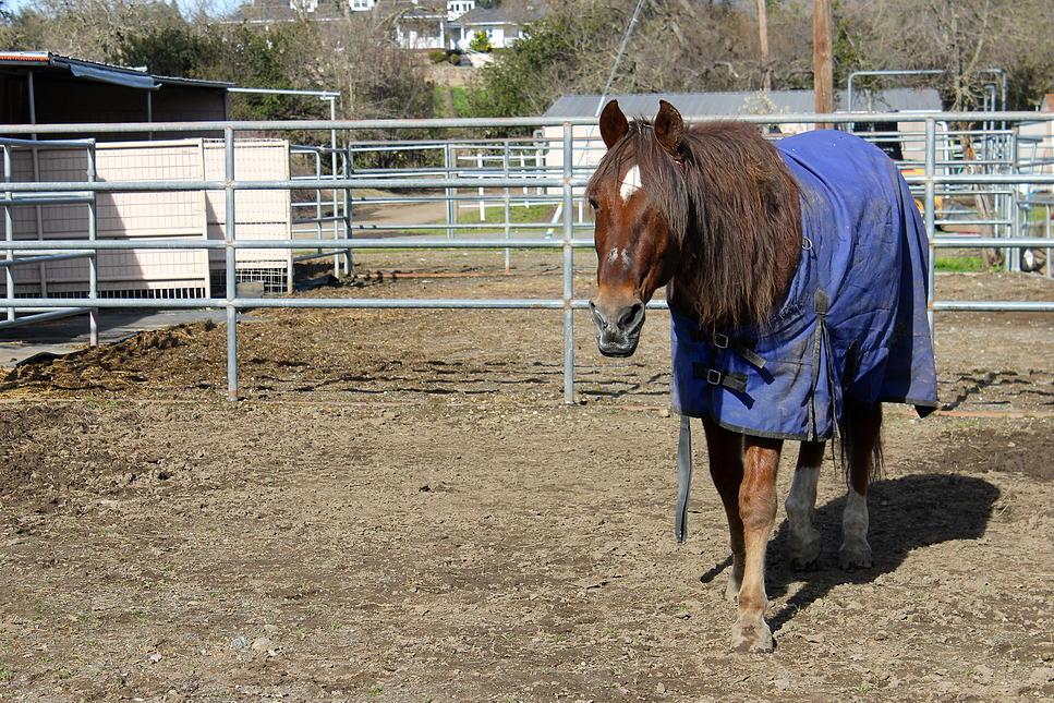 horses24.jpg