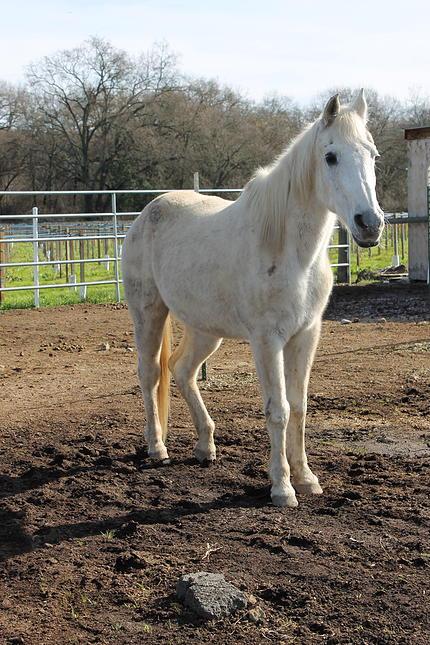 horses28.jpg