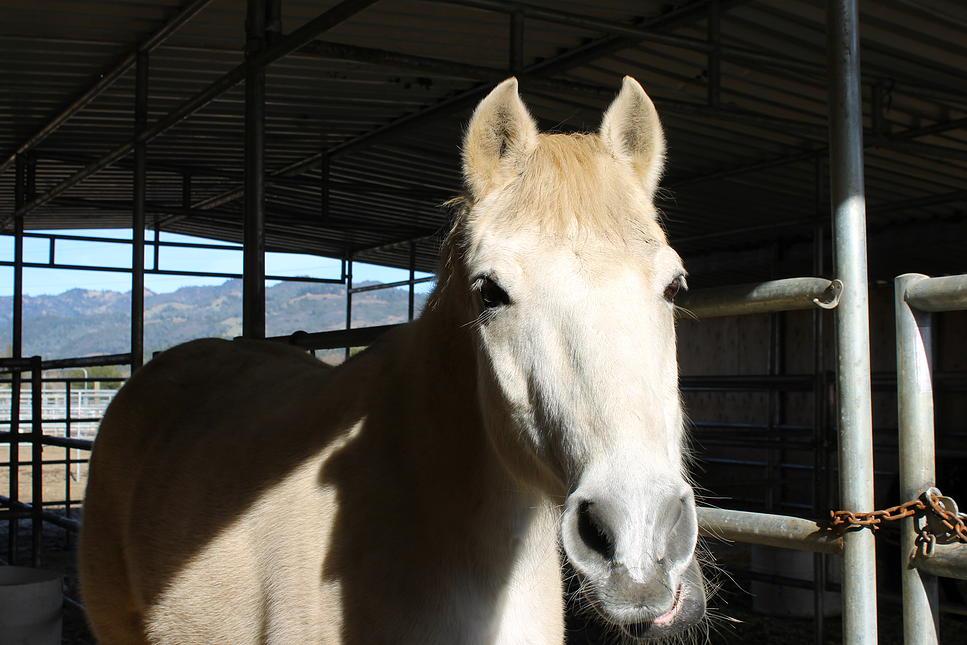 horses30.jpg