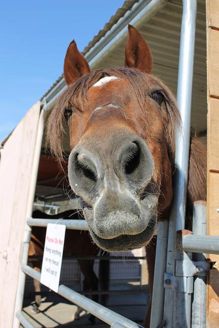 horses33.jpg