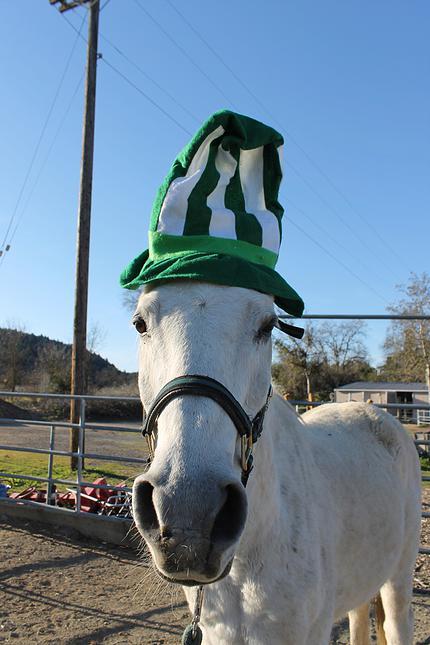 horses35.jpg